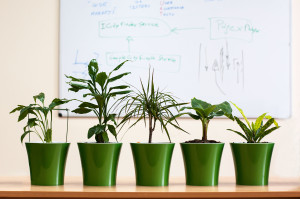 89-top-10-houseplants